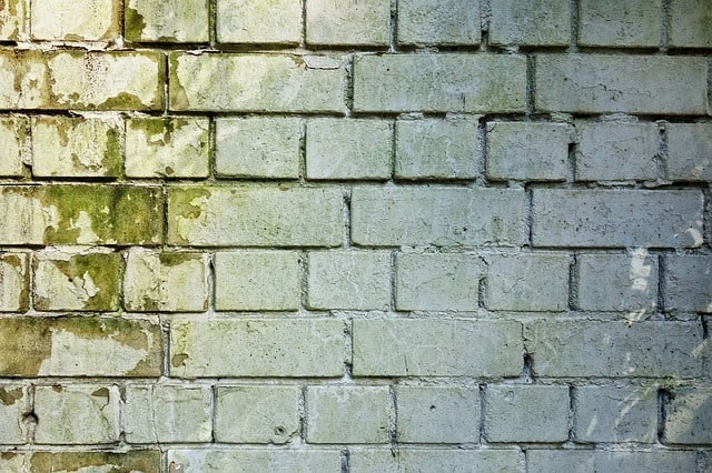 עובש בקיר
